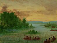 Ojibway Indians Gathering Wild Rice