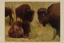 Buffalo (sketch)