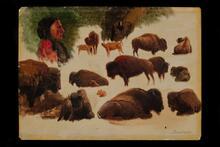 Studies of Bison