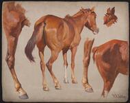Sorrel Indian Pony