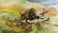 Coyotes Attack Buffalo