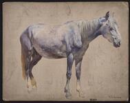 Horse, Keams Canyon, Arizona