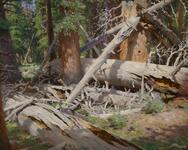 Cow Creek - Arizona