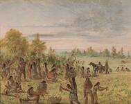 Caddo Indians Gathering Wild Grapes