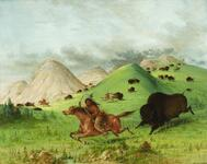 Buffalo Hunt Chasing Back