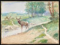 Deer Lick and Waterhole