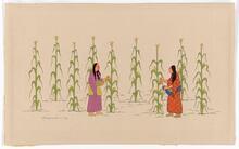 Women Gathering Corn