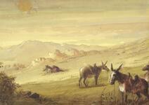 Approaching the Buffalo Herd