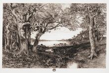 Under the Oaks - Georgica Pond