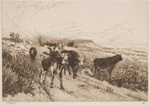 Cattle on the Coast