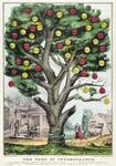 The Tree of Intemperance.