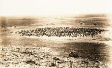 Apache Cattle