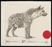 Sketch of hyena
