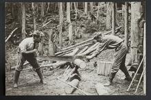 Photograph of two men sawing a log with a large hand-saw in the forest