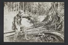 An unknown man seated on a fallen tree