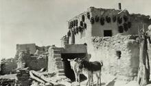 Two burros standing near an adobe house with peppers hanging near the roof
