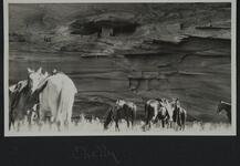 Group of horses near cliff walls in Canyon de Chelly