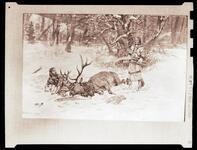 Man Trapped Under Elk