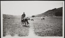 Unknown Men with Horses