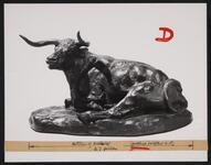'Texas Steer'