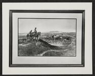 Mounted Cowboys and Cattle