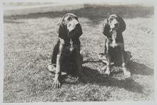 Two Dogs Sitting on Lawn