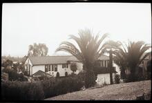 House with Palm Tree