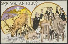 'Nature Study Elks Drinking'