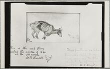 Dying Steer with Note Written by Charles M. Russell