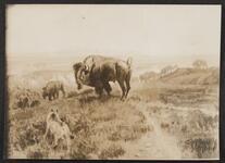 Buffalo Standing at Bluff