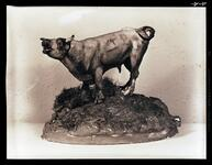 Bawling Bull