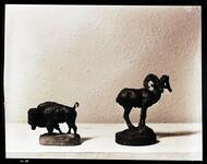 Buffalo and Mountain Sheep