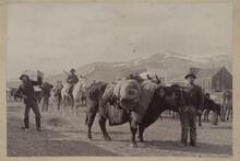 Unknown Men with Horses and Cattle