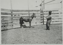 Unknown Man and Horse