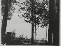 Trees and Lake