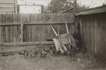 Brood of Chickens with Wheelbarrow
