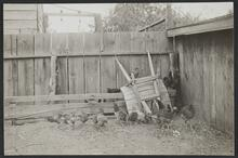 Brood of Chickens with Wheelbarrow