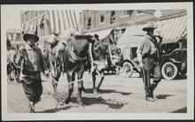 Men with Mules