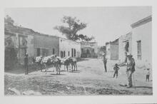 People and Donkeys on Street