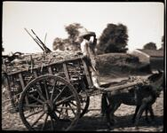 Man on Horse-Drawn Cart