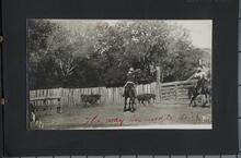 Two Men on Horseback Roping Calves