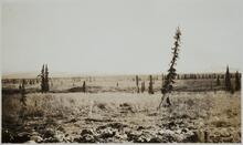 View of Trees and Land
