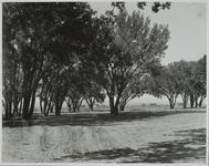 Grove at China Lee