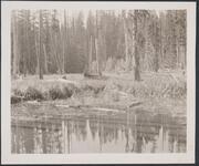 Still Water Reflecting Trees