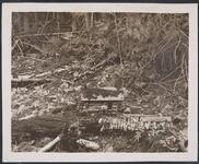 Model Log Cabin