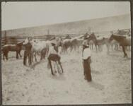 Cowboys in Corral of Horses