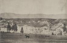Horseman and Buffalo in North Montana