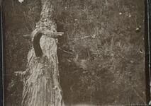 Bunny by Tree