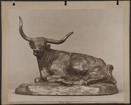 Texas Steer
