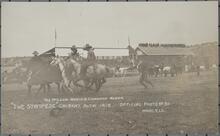 Man Roping Horses